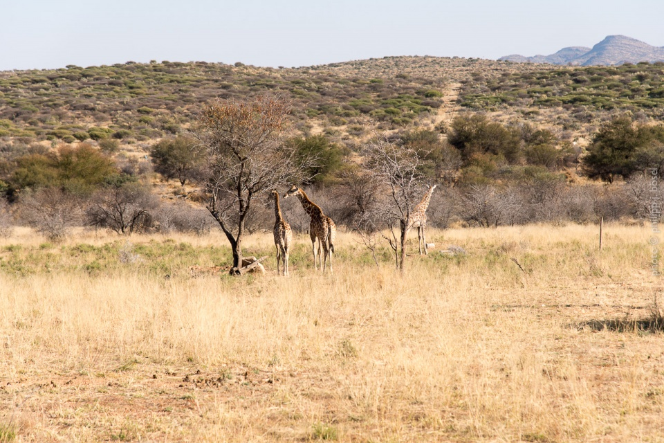 Namibia, Voigtland
