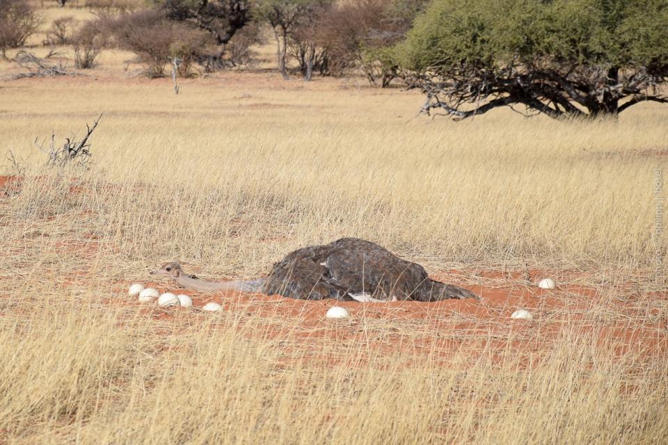 Namibia, Kalahari