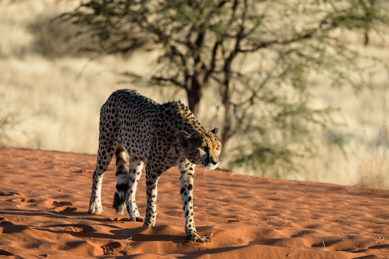 Namibia, Bagatelle Kalahari Game Ranch