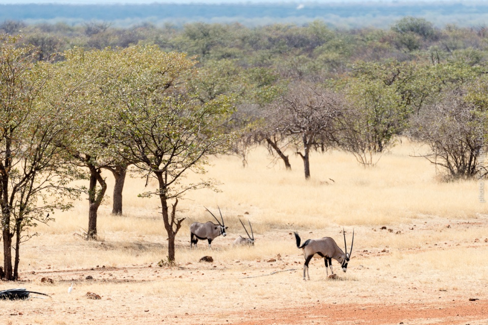 Namibia, Ugab-Terassen