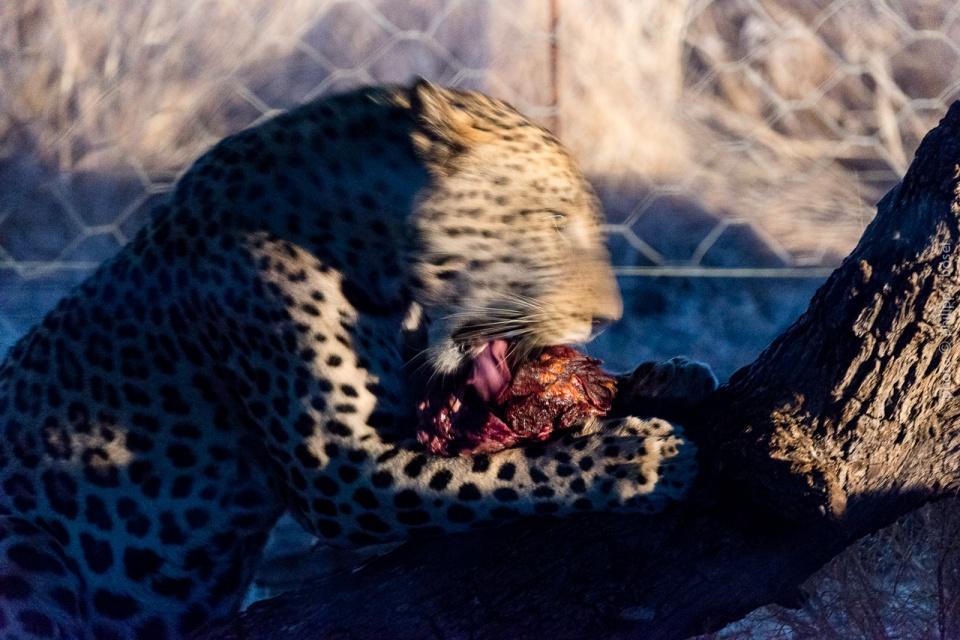 Namibia, Okutala Etosha Lodge