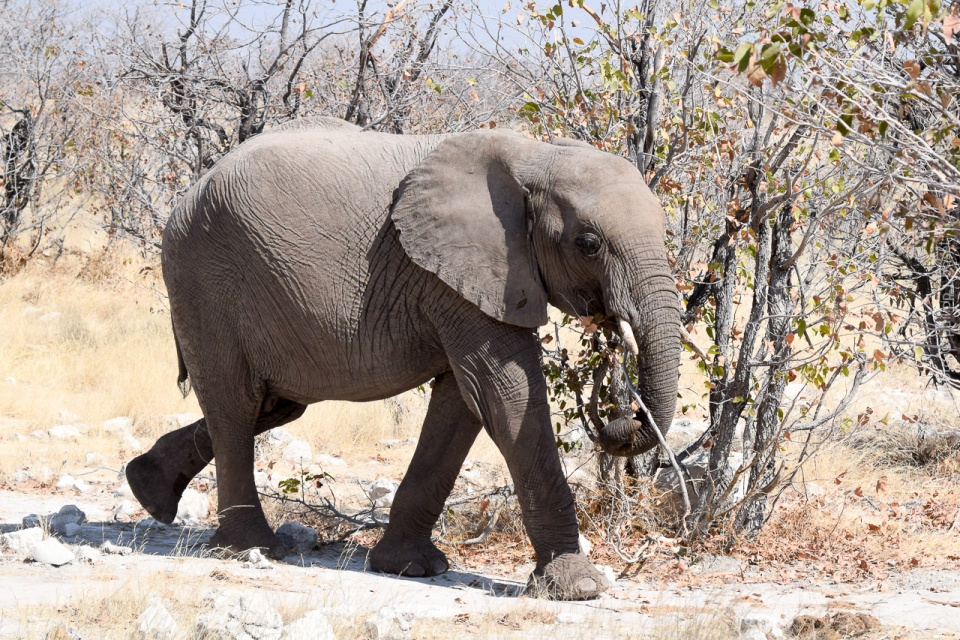 Namibia, Etosha National Park