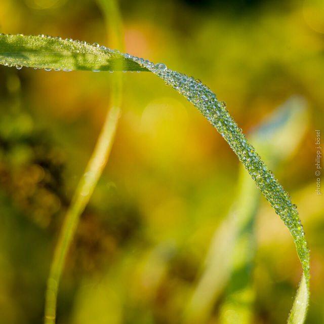 herbst fall Tau nature natur autumn goldenerherbst indiansummer wdrhellip